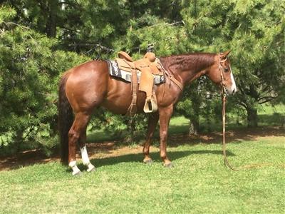 Peptoes Cowboy