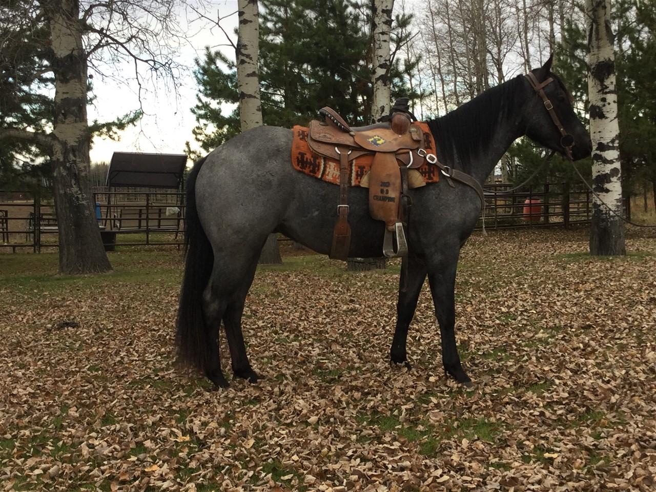 BSR Big Returns: - Patten Rope Horses